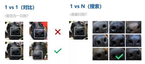 旷视科技鼻纹识别技术1:1比对与1:N比对